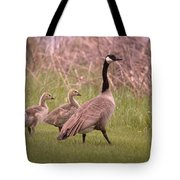 Goslings On A Walk Tote Bag