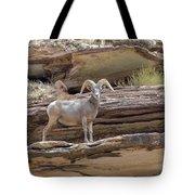 Grand Canyon Big Horn Sheep Tote Bag