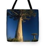 Grandidiers Baobab Trees Madagascar Tote Bag