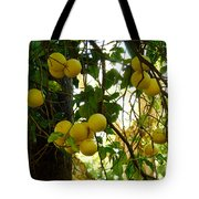Grapefruits Tote Bag