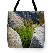 Grasses In Oasis On Borrego Palm Canyon Trail In Anza-borrego Desert Sp-ca Tote Bag