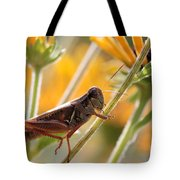 Grasshopper On Coneflower Stem Tote Bag