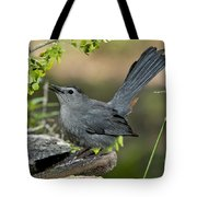 Gray Catbird Drinking Tote Bag