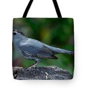 Gray Catbird Dumetella Carolinensis Tote Bag