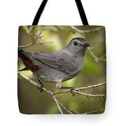 Gray Catbird Tote Bag