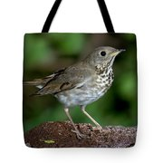 Gray-cheeked Thrush Catharus Minimus Tote Bag