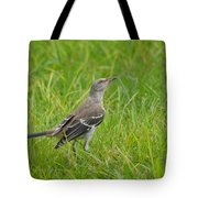 Gray-eyed Catbird II Tote Bag