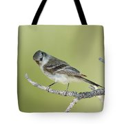 Gray Flycatcher Tote Bag