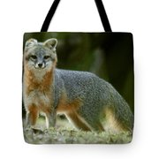 Gray Fox On Alert Tote Bag