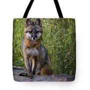 Gray Fox Posing Tote Bag