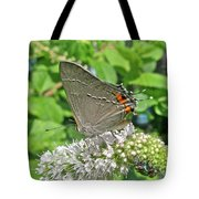 Gray Hairstreak Butterfly - Strymon Melinus Tote Bag