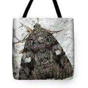 Gray Owlet Moth Tote Bag
