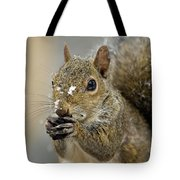 Gray Squirrel - D008392  Tote Bag