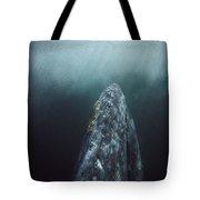 Gray Whale Magdalena Bay Baja California Tote Bag