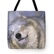 Gray Wolf Canis Lupus Shaking Snow Off Tote Bag