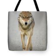 Gray Wolf Denali National Park Alaska Tote Bag
