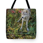 Gray Wolf Drinking Tote Bag