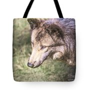 Gray Wolf Grey Wolf Canis Lupus Tote Bag