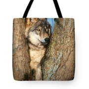 Gray Wolf In Tree Canis Lupus Tote Bag