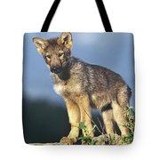 Gray Wolf Pup Montana Tote Bag