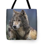 Gray Wolf Resting North America Tote Bag