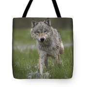 Gray Wolf Walking Through Water Tote Bag