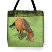 Grazing Chestnut Pony Tote Bag