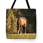 Grazing Horse At Sunset Tote Bag