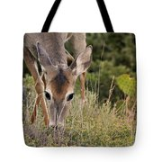 Grazing Oklahoma Tote Bag
