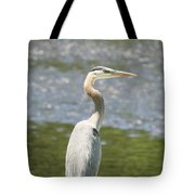 Great Blue Heron In Light  Tote Bag