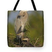 Great Blue Heron With Chicks Florida Tote Bag