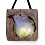 Great Crested Flycatcher In Nest Cavity Tote Bag