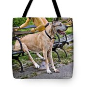 Great Dane Sitting On Park Bench Tote Bag