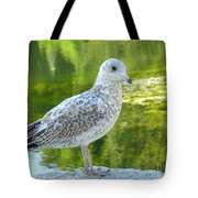 Great Expectation Tote Bag