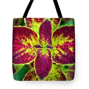 Great Expectations Coleus Tote Bag