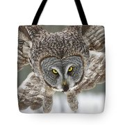 Great Gray Owl Pictures 648 Tote Bag