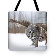 Great Gray Owl Pictures 658 Tote Bag