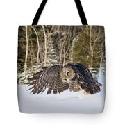 Great Gray Owl Pictures 740 Tote Bag