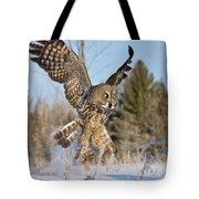 Great Gray Owl Pictures 767 Tote Bag