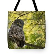Great Gray Owl Pictures 779 Tote Bag
