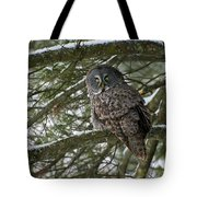 Great Gray Owl Pictures 780 Tote Bag