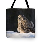 Great Gray Owl Pictures 788 Tote Bag