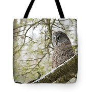 Great Gray Owl Pictures 804 Tote Bag