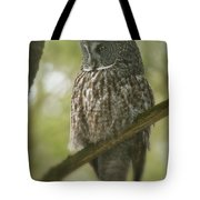 Great Gray Owl Pictures 823 Tote Bag