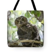 Great Horned Owl Fledgling  Tote Bag