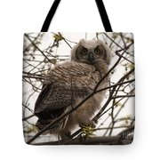 Great Horned Owlet 2 Tote Bag