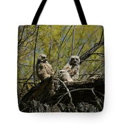 Great Horned Owlets 1 Tote Bag