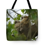 Great Horned Owlets 5 20 2011 Tote Bag
