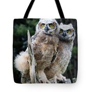 Great Horned Owlets Tote Bag