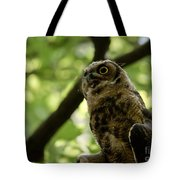 Great Horned Youngster Tote Bag